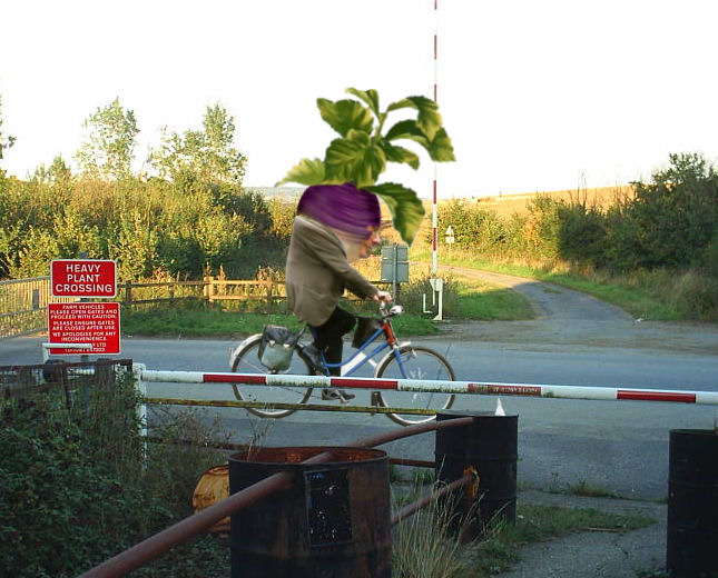 0_1463577608480_HeavyPlantCrossing.jpg